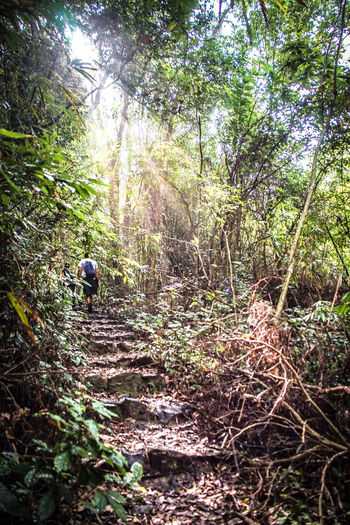 traveling Vietnam 2018 ASIA Hiking Travel Traveling Vietnam Adventure Day Direction Explore Forest Full Length Growth Land Leisure Activity Nature Non-urban Scene One Person Outdoors Plant Real People Rear View The Way Forward Trail Tranquility Tree Walking WoodLand