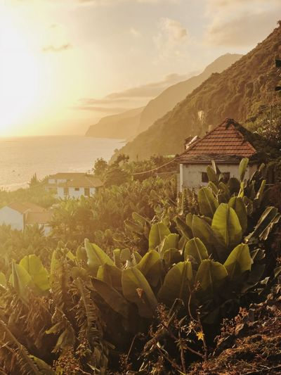 Madeira Sky Plant Architecture Nature Scenics - Nature Growth Mountain Outdoors Sea Sunset Cactus Day Building No People Succulent Plant Built Structure Water Beauty In Nature Building Exterior House