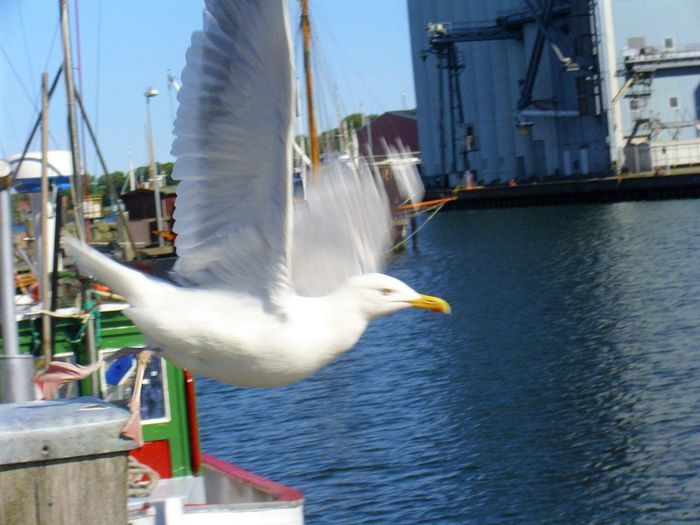 Flugstart der Seemöwe, seagull starts to fly Animal Themes Animal Wildlife Bird Close-up Day Gespreitzte Flügel Harbor Nature Nautical Vessel No People One Animal Outdoors Sea Seagull Seemöwe Sky Spread Wings Water