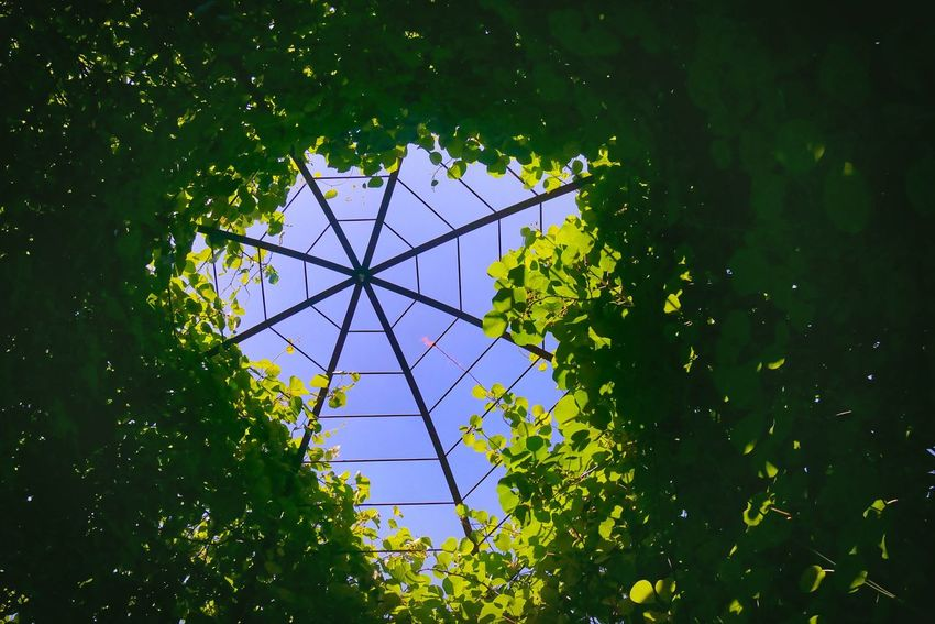Look up the garden Green Vine Garden Low Angle View No People Day Green Color Growth Architecture Sky Outdoors Sunlight Leaf Plant Part Pattern Directly Below