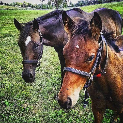 Mama and foal! RamseyFarm Farm Thoroughbred Thoroughbredracing