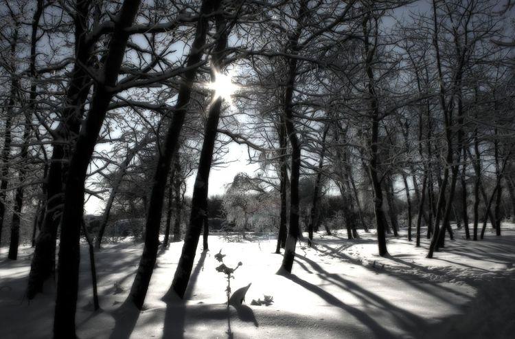 Tree Nature Winter Snow Day Outdoors Forest Nature Winter Day Лес зима Зимний лес снег деревья солнце