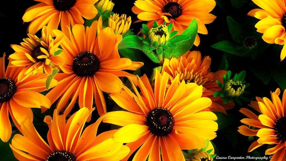 Sunflower Cousins All Bunched Up Together Sunflowers🌻 Flower Head Sunflower Head Yellow Yellow Flower Beauty In Nature