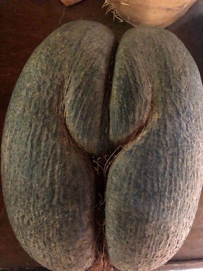Coco de Mer Unusual Shape Rare Coco De Mer Coconut Beauty In Nature Food No People Close-up Nature
