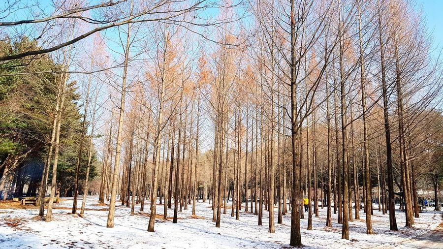 Into the woods.. Namiisland Korea2017 Travels Korea ñami Nature Naturephotography Trees Winter