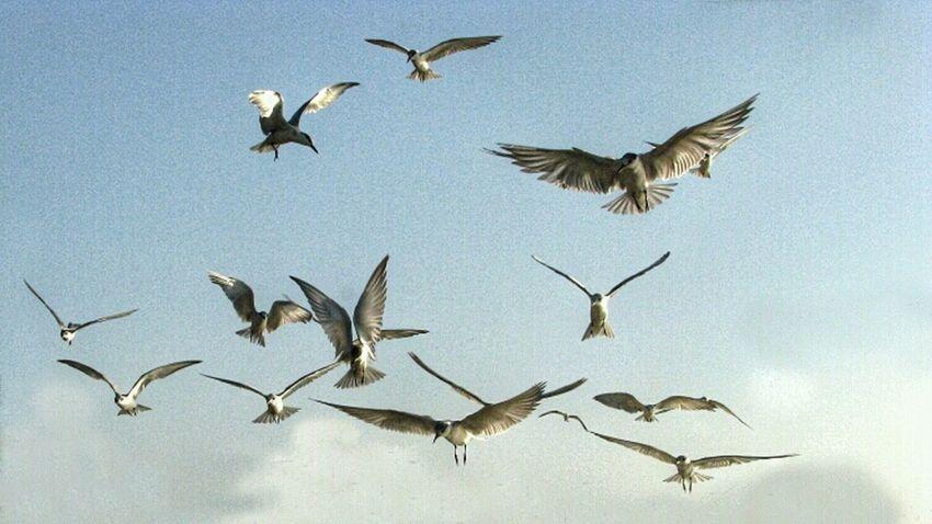 Bird Little Bird Nature