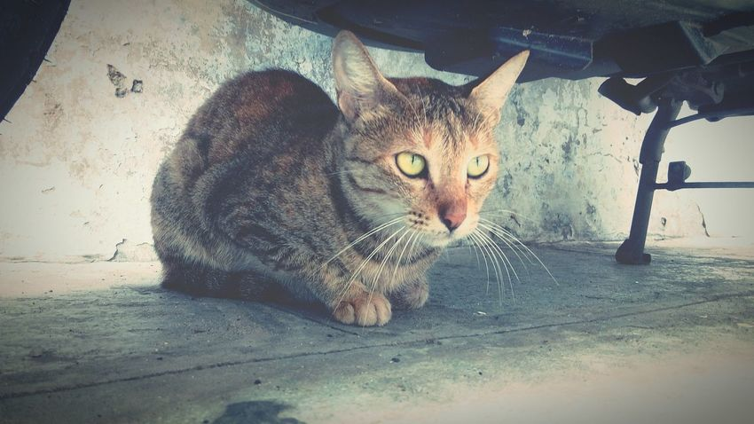 Cat Animal No People Nature Nature Love Love Animal Photography Perfect Click The Week On EyeEm