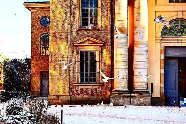 📷🐦⛪ Freelikeabird Flyaway Winter Colorful Color Food Birdfood Birds Coldweather Followme Follow Redbullgivesyouwings ? Photo Streetphotography Bulding Likes Street Beautiful Day Sunlight Perfect Gothenburg Sweden Tagsforlikes Goteborg gbg bild fåglar @awesome_pixels @exaperture @gothenburg_sweden @goteborgcom @ilovegbg