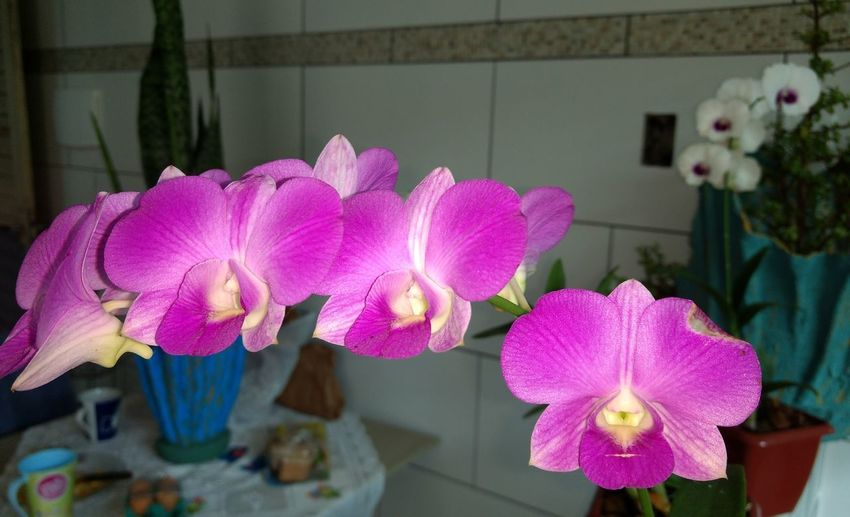 Flower Pink Color Purple No People Plant Orchid Nature Day Close-up Beauty In Nature
