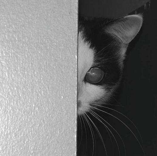 Kotor Pół Kot Cat Half Cat Oczko Eye Cats Of EyeEm Caty Caty♡ Catoftheday Animal Love Animal Photography Animal_collection Cats 🐱 Cats Catportrait Cat♡