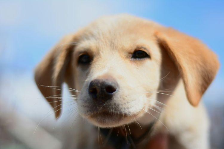 Мой Рыжик Russia Kazan I Love My Dog Pets And Animals My Dog Old Photo