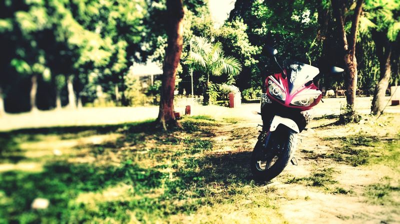 Tree Riding Transportation Outdoors Nature Day Grass Horizontal My Bike. Land Vehicle Yamaha R15 My Bike Randam First Eyeem Photo Random Shots Photography Taking Photos Editing Check This Out