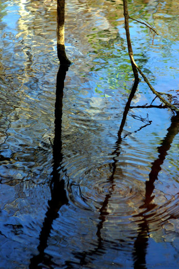 Water Reflection in the Florida Everglades Beauty In Nature Branch Close-up Day EyeEm EyeEm Best Shots EyeEm Best Shots - Nature EyeEm Gallery EyeEm Nature Lover EyeEmBestPics Nature No People Outdoors Reflection Tranquility Tree Water
