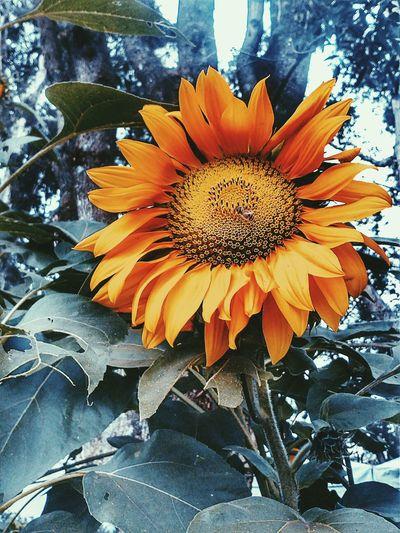 Color Flower Flower Photography Flowerporn Naturelovers Nature Photography Flowers,Plants & Garden Sunflower Nature Nature_collection Naturephotography Nature Textures Plants Plantsandflowers Likeforlike #likemyphoto #qlikemyphotos #like4like #likemypic #likeback #ilikeback #10likes #50likes #100likes #20likes #likere Follow #f4f #followme #TagsForLikes #TFLers #followforfollow #follow4follow #teamfollowback #followher #followbackteam #followh Flowerstagram
