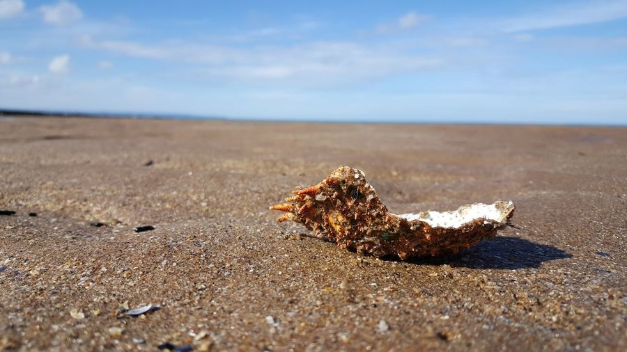 Enjoying Life Seaside Seascape Minimal Sea View Serene Outdoors Landscape EyeEm Nature Lover Simplicity Sea And Sky Beach Photography Mobile_photographer Beach Eye4photography  Shell Collection Shell Crabshell Spider Crab