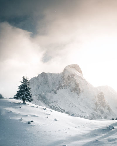 Christmas The Week On EyeEm Alps Beauty In Nature Christmas Tree Cold Temperature Day Landscape Mountain Mountain Range Nature No People Outdoors Range Scenics Sky Snow Snowcapped Mountain Snowfall Switzerland Tranquil Scene Tranquility Tree Weather Winter