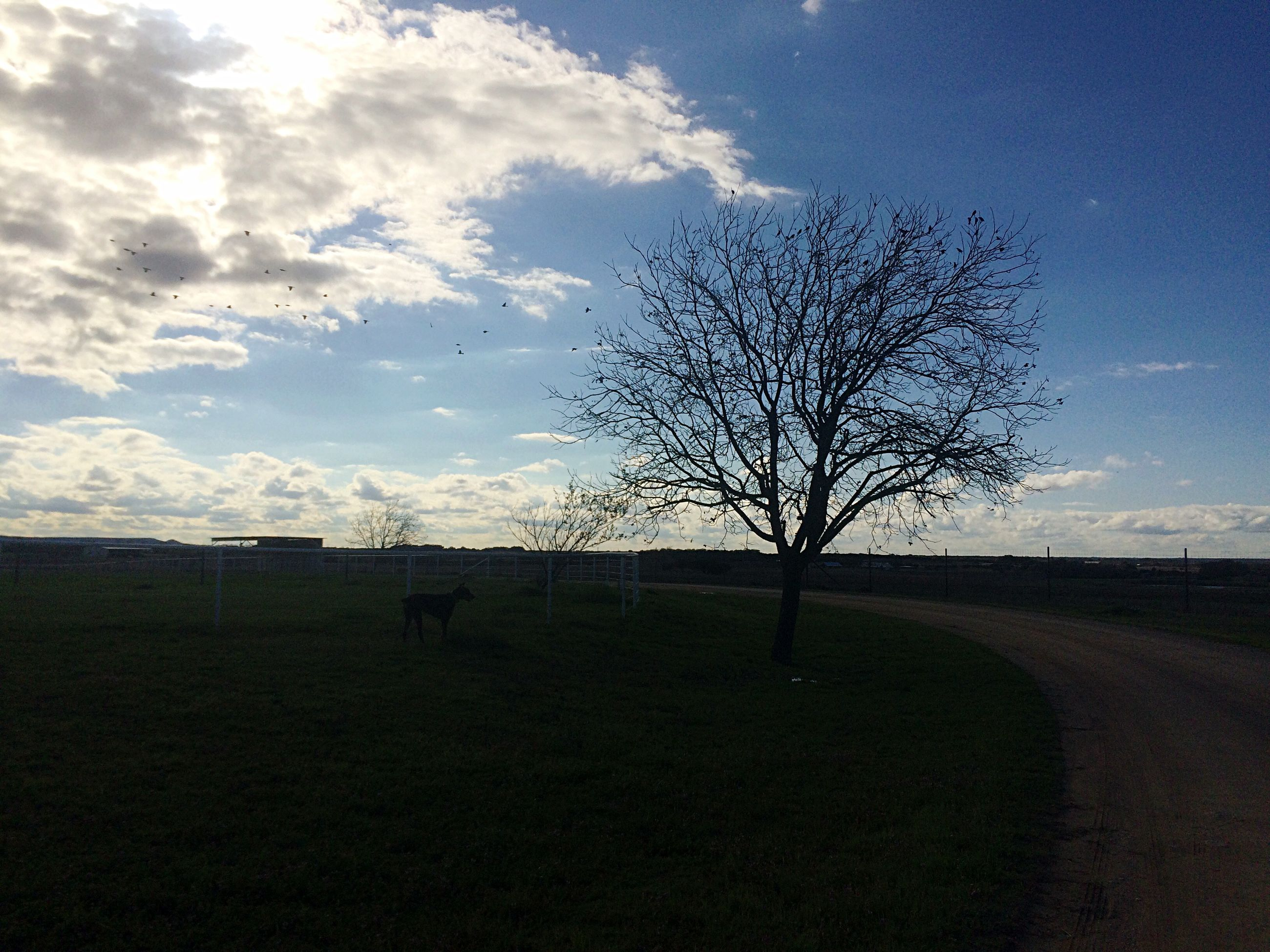 bare tree, tree, sky, tranquility, tranquil scene, landscape, field, scenics, beauty in nature, nature, branch, cloud - sky, silhouette, cloud, single tree, grass, non-urban scene, remote, solitude, no people