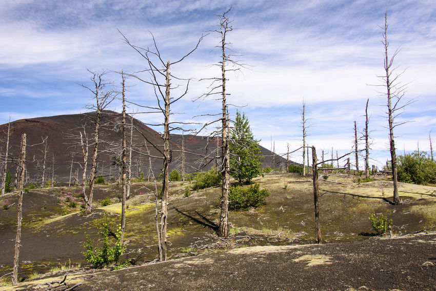 Dead trunks in volcanic desert Accidents And Disasters Arid Climate Bare Tree Beauty In Nature Cloud - Sky Day Desert Far East Geology Kamchatka Landscape Mountain Natural Disaster Nature No People Outdoors Russia Sky Social Issues