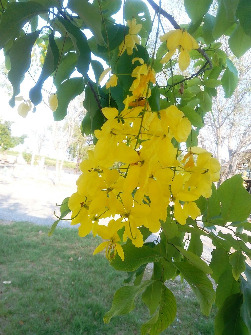 yellow, growth, flower, nature, fragility, day, beauty in nature, leaf, petal, outdoors, plant, freshness, no people, tree, low angle view, close-up, flower head, branch