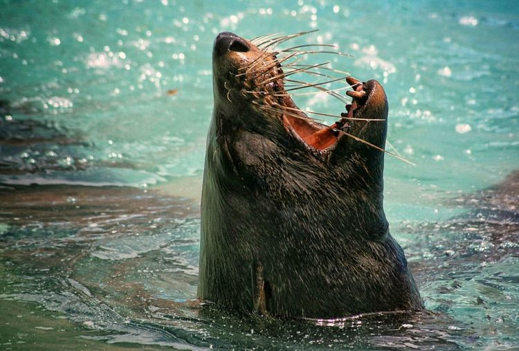 A seal that emerges to breathe