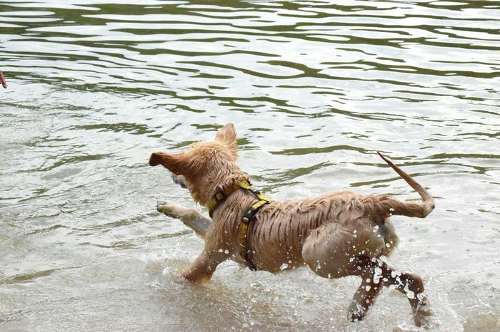 Éco the dog Dog Doginthewater dogswiming First Eyeem Photo