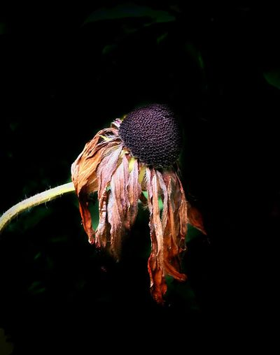 Momentariness Fugacity EyeEm Nature Lover EyeEm Best Shots AntiM Fall Beauty