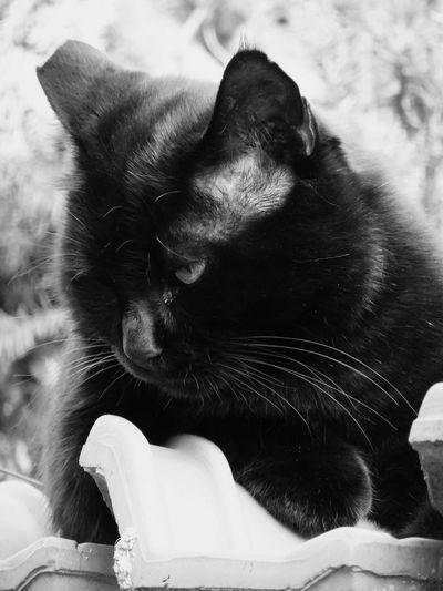 Animal Photography Cute Cats Animals Cats Of EyeEm BLackCat Cat Pets Fujifilm Catsofinstagram Gatto