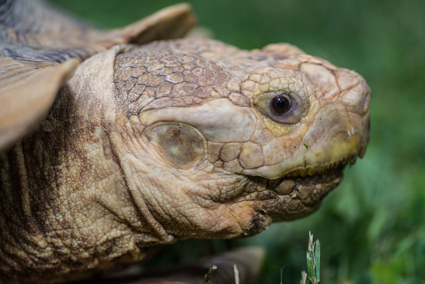 Animal Animal Body Part Animal Eye Animal Head  Animal Markings Animal Themes Close-up Day Focus On Foreground Natural Pattern Nature No People Outdoors Part Of Portrait Selective Focus Tortoise Turtle Wildlife Animals