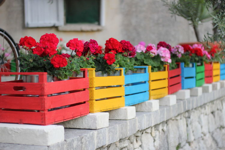 Close-up of flowers in colorful boxes on retaining wall