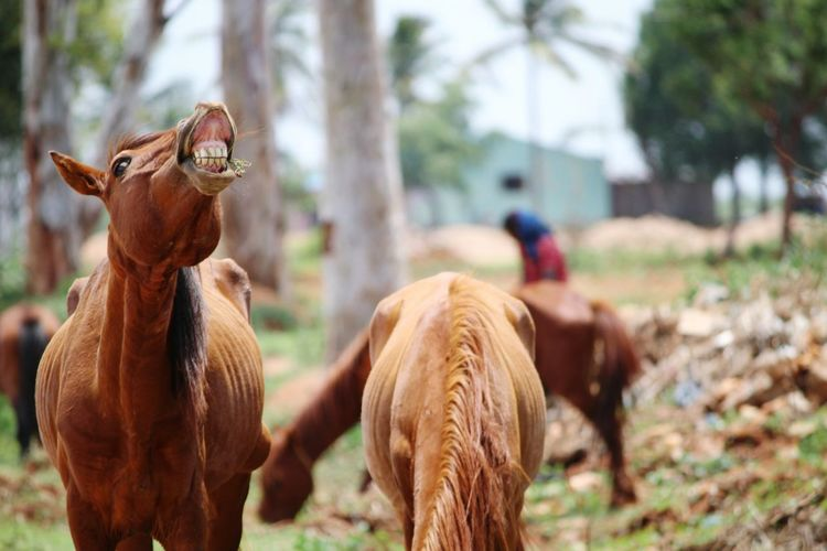 Animal Horselover Livestock One Animal Domestic Animals Mammal Brown Outdoors Tree Rural Scene Day Animal Themes Nature No People Horses Horselovers Horse Smiling Horse Photography  Horse Grazing Horse HORSE LAUGHING Horse In Field Brown Hair Brown Animal Brown Horse Preety Horse say cheese EyeEmNewHere The Week On EyeEm Perspectives On Nature