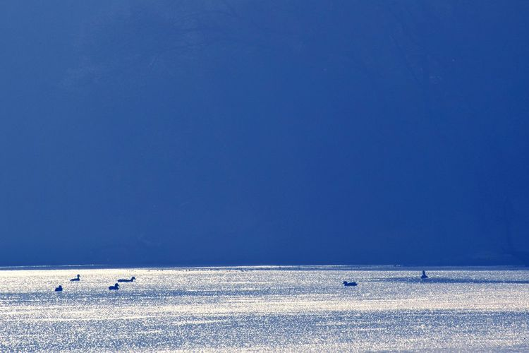 Birds swimming on sea against clear blue sky