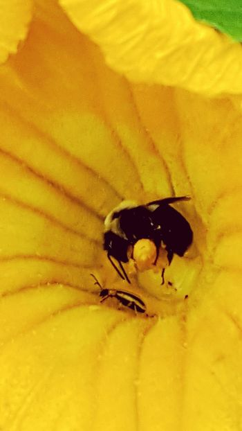 Insect Animals In The Wild Animal Themes Yellow One Animal Animal Wildlife Close-up No People Outdoors Day Nature Flower