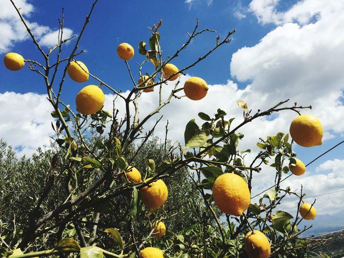 Italy🇮🇹 Sicily,italy Lemons Naturelovers Sicilia Sicily ❤️❤️❤️ Palermo❤️ Sicily, Italy