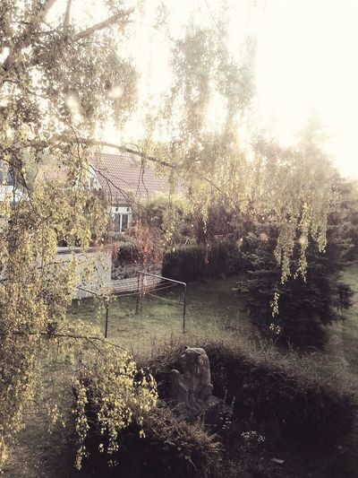 Good_morning! Sunshine Tree