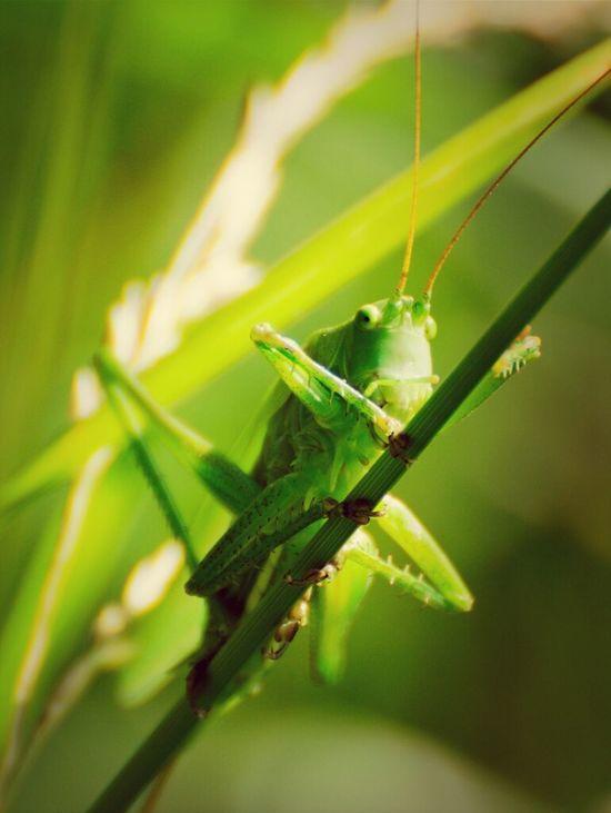 Nature Animals Green Nikon Insects  Close Up