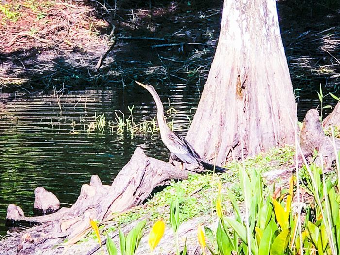 Nature day Water Nature Outdoors Day Lake No People Tree Growth Grass Tree Trunk Plant Beauty In Nature Sunlight Close-up Tranquility
