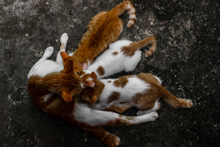 High angle view of cats sleeping on field