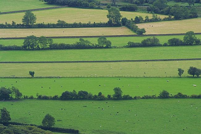 Fields of green Green Color Field Rural Scene Nature Farm Agriculture Landscape Outdoors Beauty In Nature Lush Foliage Social Issues Scenics Livestock Aerial View Hill Day No People Grazing Grass Lake District National Park Lake District Uk England