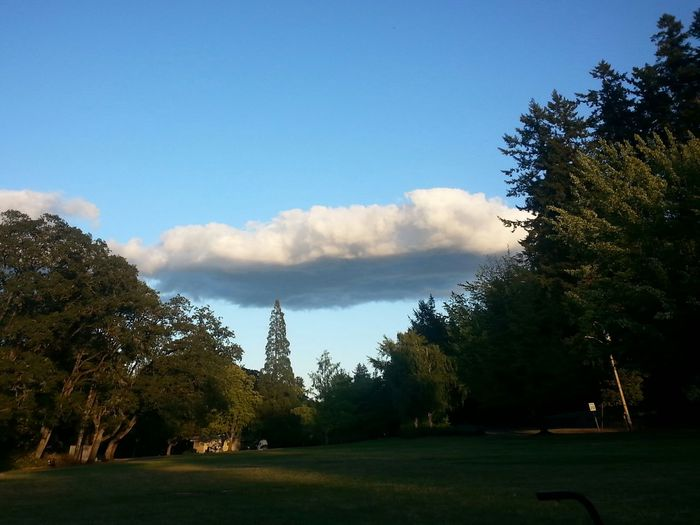 Protecting Where We Play Skinner's Butte Park Clouds And Sky Kickball NWAACK