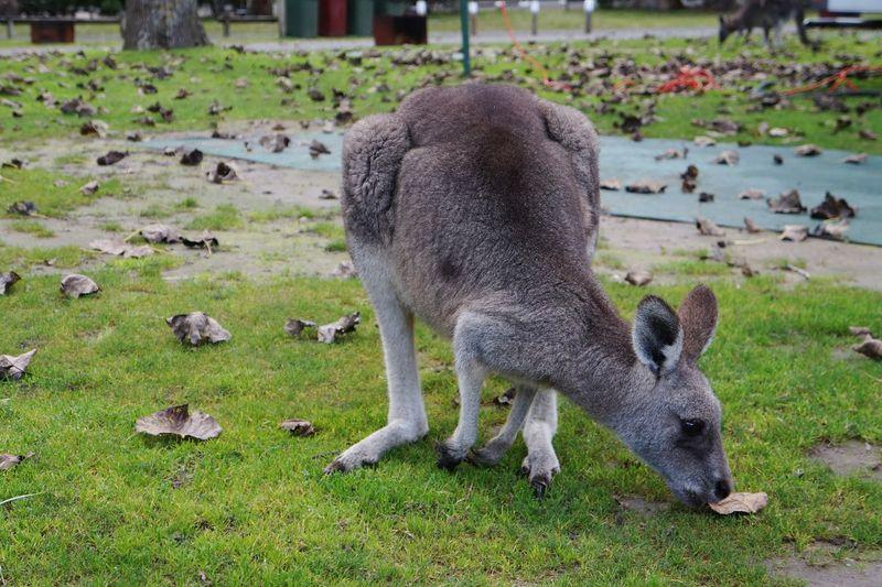 Australia EyeEm