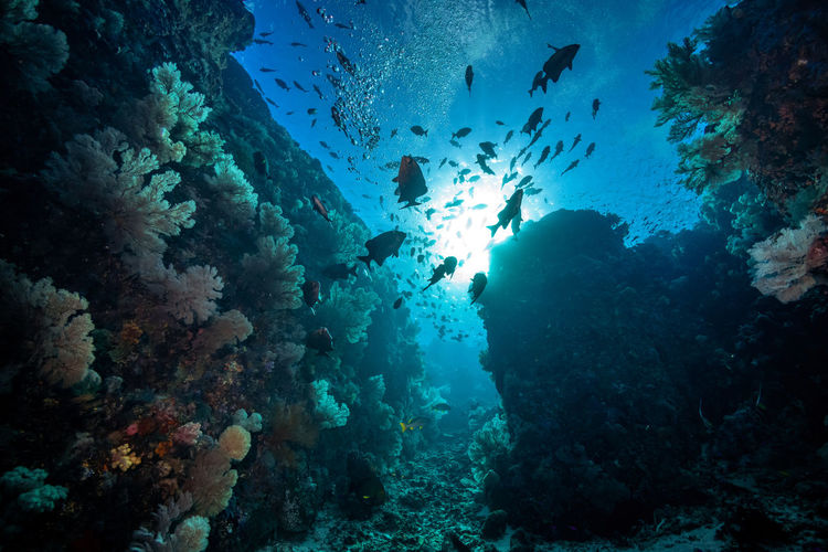 beautiful Indonesia Underwater UnderSea Sea Sea Life Water Animal Animal Themes Animal Wildlife Fish Animals In The Wild Marine Swimming Vertebrate Invertebrate Coral Large Group Of Animals Group Of Animals Nature School Of Fish No People Ecosystem