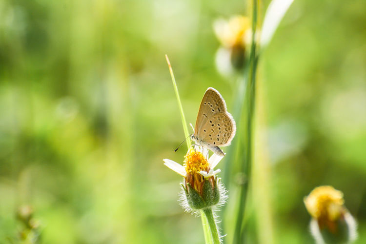 Grass flowers are food sources for butterfly & small insects. Animal Themes Background; Beauty In Nature Bloom; Blossom; Blur; Botany; Butterfly; Close-up Day Environment; Flower Fragility Grass; Green; Growth Insect Insect; Meadow; Nature No People One Animal Outdoors Plant Sunny;