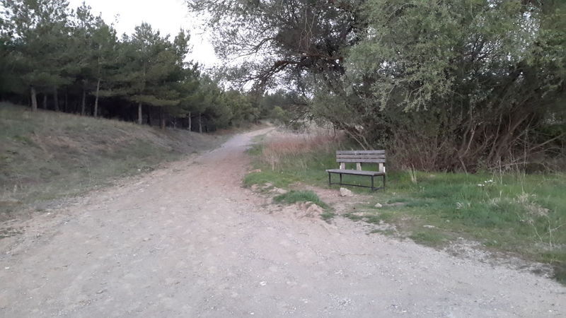 Enjoying Life, Bench Bench By The Road Woods Trees Nature Summer Evening Trekking