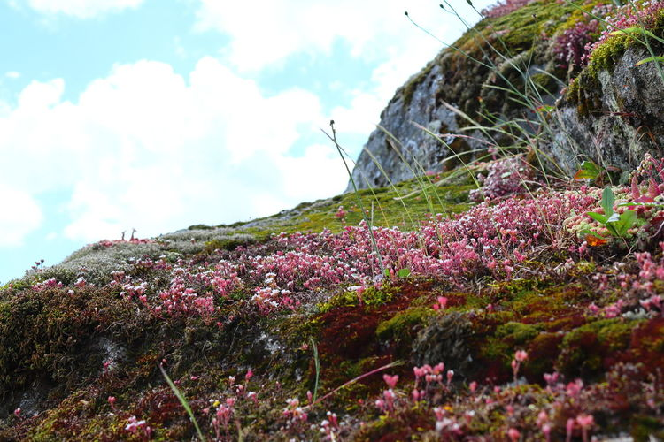 Pink flowering plants by land against sky