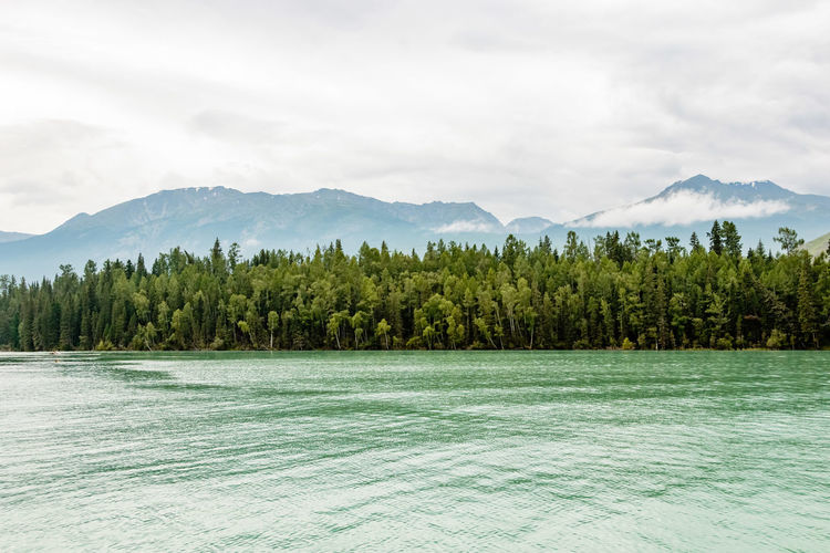 Green Lush Foliage On Shore Against Mountains