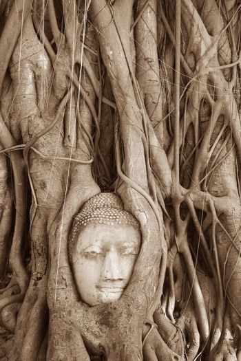 Old Buddha Statue Decay Of The Object Buddha Statue Tree And Buddha Statue Old Object Sepia Sepia Photography Textured  Buddhism Buddha Statue In Thailand Antiquities Antiquities In Thailand Archaeological Site ใน Thailand