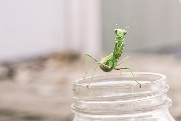 Close-up of grasshopper on jar