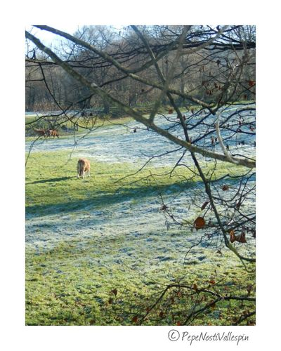 Nature Photography Outdoors Landscape Pola De Siero Poladesiero Naturephotography Outdoor Photography Frost Icefrost
