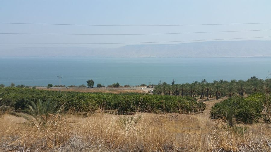 tiberias lake Plant Landscape Environment Cable Sky Nature Land Tree Field No People Day Electricity  Scenics - Nature Beauty In Nature Power Line  Grass Tranquil Scene Tranquility Non-urban Scene Outdoors Power Supply Lake Tiberias Israel