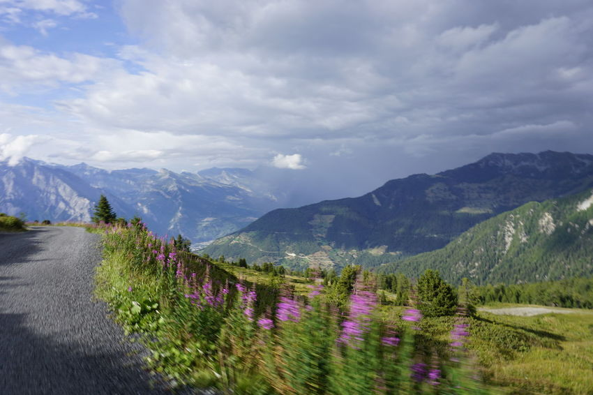 Driving Weather Beauty In Nature Cloud - Sky Day Environment Flower Flowering Plant Growth Idyllic Land Landscape Mountain Mountain Range Nature No People Non-urban Scene Outdoors Plant Scenics - Nature Sky Tranquil Scene Tranquility